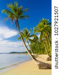 palm panorama coconut coast  | Shutterstock . vector #1027921507