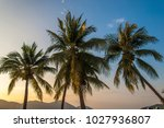 background of coconut trees... | Shutterstock . vector #1027936807
