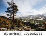 pine on the background of snow... | Shutterstock . vector #1028002393