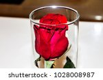 red roses inside the glass.   Shutterstock . vector #1028008987