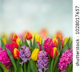Pink And Violet Hyacinths With...
