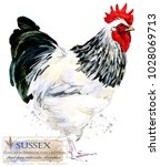 Sussex Rooster. Poultry Farmin...