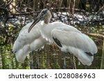 wood stork  mycteria americana  ...   Shutterstock . vector #1028086963