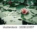 pink aquatic flower floating on ... | Shutterstock . vector #1028113357