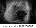 dog nose closeup. pet... | Shutterstock . vector #1028200807