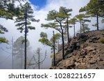 west of gran canaria  february... | Shutterstock . vector #1028221657