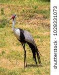 heron in prague zoo  czech... | Shutterstock . vector #1028331073