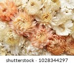 green dried wild flowers  dry... | Shutterstock . vector #1028344297