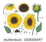 collection of beautiful... | Shutterstock .eps vector #1028356597