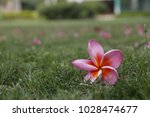 flower lonely lone  | Shutterstock . vector #1028474677