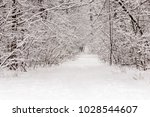 beautiful winter forest with a...   Shutterstock . vector #1028544607