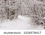 beautiful winter forest with a...   Shutterstock . vector #1028578417