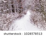 beautiful winter forest with a...   Shutterstock . vector #1028578513