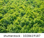 green trees nature background | Shutterstock . vector #1028619187