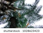 vibrant green palm leaves.... | Shutterstock . vector #1028623423