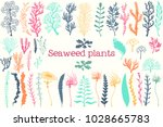 sea plants and aquarium seaweed ...