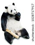 giant panda eating bamboo...   Shutterstock . vector #1028717917
