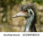 A Portrait Of An Emu Bird