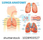 lungs anatomy medical vector... | Shutterstock .eps vector #1028903527