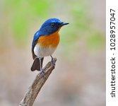 beautiful blue bird  hill blue... | Shutterstock . vector #1028957047