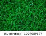 botany green nature grass... | Shutterstock . vector #1029009877