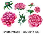 Stock photo set of peonies oil painting flowers peony isolated on white background 1029045433