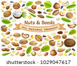 poster seeds sunflower  pumpkin ... | Shutterstock .eps vector #1029047617