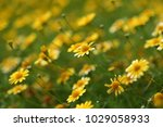 close up of yellow flowers in...   Shutterstock . vector #1029058933