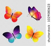 butterfly set isolated with... | Shutterstock .eps vector #1029080623