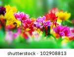 Colorful Fresh Flowers In A...