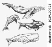 whales set. hand drawn... | Shutterstock .eps vector #1029100723