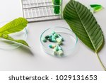 science research leaves of... | Shutterstock . vector #1029131653