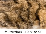 striped skin a cat in the... | Shutterstock . vector #102915563