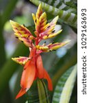 Small photo of Colorful flowers of Bromeliad -Name of Aechmea Samurai in various colors, Thailand in the garden