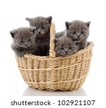 Four Little British Kittens Ca...