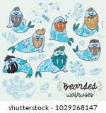 bearded walruses set. vector... | Shutterstock .eps vector #1029268147