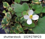 top view close up of the flower ... | Shutterstock . vector #1029278923
