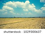 sky and cloud moutain view in... | Shutterstock . vector #1029300637