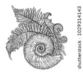 graphic prehistoric seashell... | Shutterstock .eps vector #1029314143