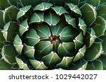 beautiful close up of a...   Shutterstock . vector #1029442027