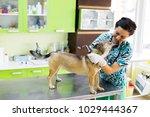 veterinarian woman has a moment ... | Shutterstock . vector #1029444367