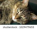 lovely cat in a living room   Shutterstock . vector #1029479653