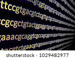 genome sequencing. the... | Shutterstock . vector #1029482977