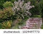 summer  in the garden near the... | Shutterstock . vector #1029497773