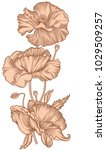 hand drawn blooming nude poppy... | Shutterstock .eps vector #1029509257