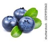 blueberries isolated on white... | Shutterstock . vector #1029595063