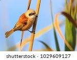 wild bird in protected... | Shutterstock . vector #1029609127