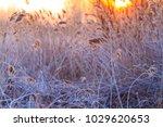 fantastic outdoor sunrise ... | Shutterstock . vector #1029620653