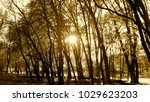 swamp view of the sun's light...   Shutterstock . vector #1029623203