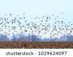 birds fly over the sunflower... | Shutterstock . vector #1029624097